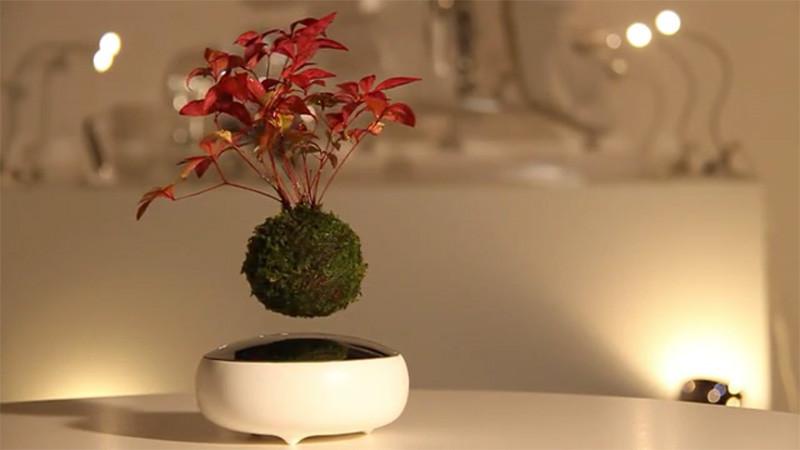 craquez pour le bonsa en l vitation oui vous avez bien lu en l 39 air. Black Bedroom Furniture Sets. Home Design Ideas