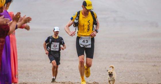 Un chien errant rejoint un marathonien, court 100km à ses côtés, et devient son animal de compagnie ! Course