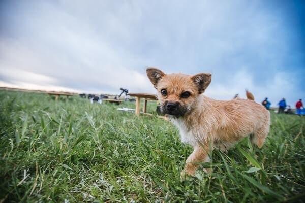 Un chien errant rejoint un marathonien, court 100km à ses côtés, et devient son animal de compagnie ! Herb