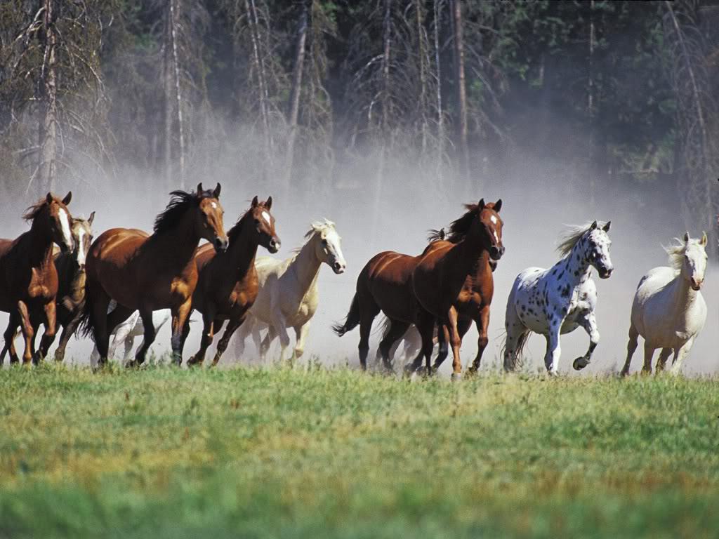 45 000 chevaux sauvages pourraient tre prochainement abattus par le gouvernement am ricain pour. Black Bedroom Furniture Sets. Home Design Ideas