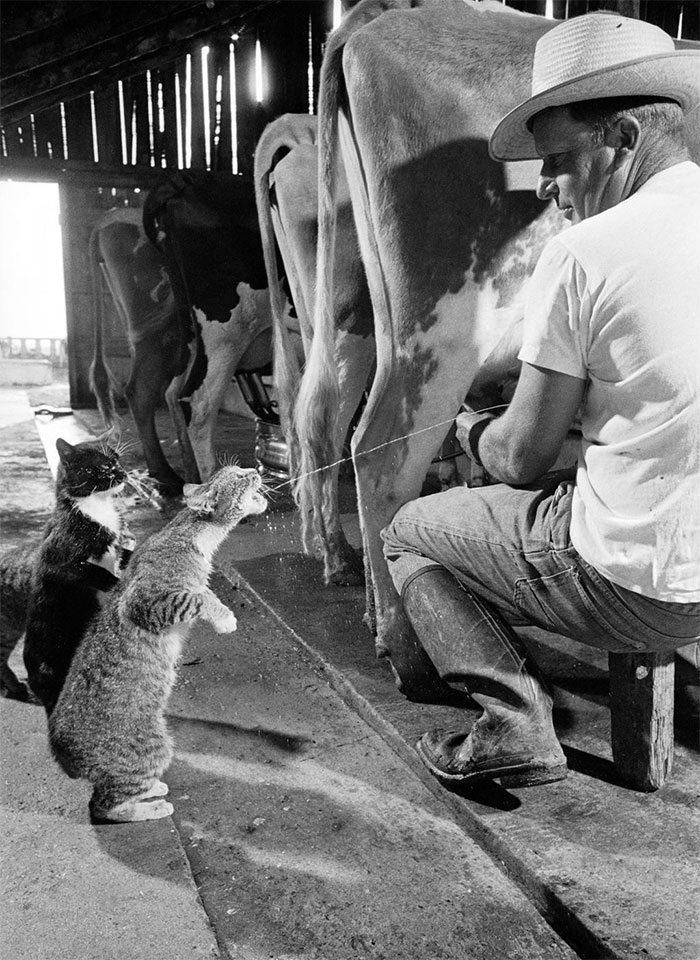 Série de photos en noir et blanc très émouvantes  9