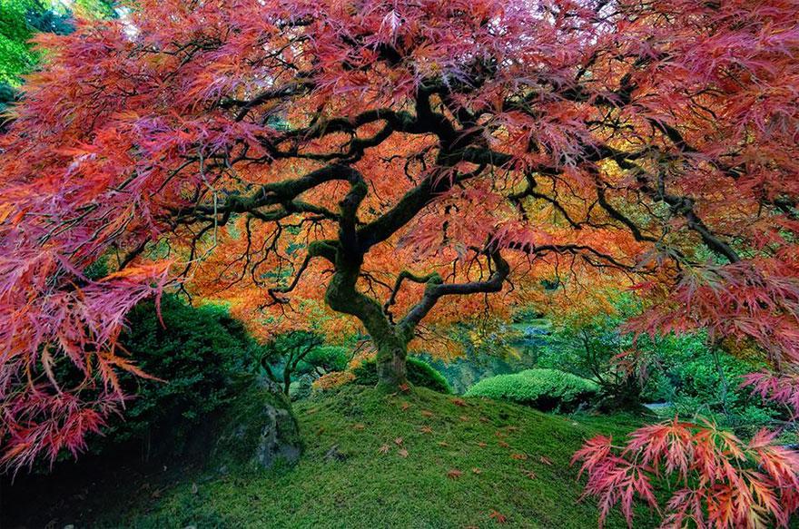 La vie secrète des arbres. Passionnant - Page 3 Aerablejap