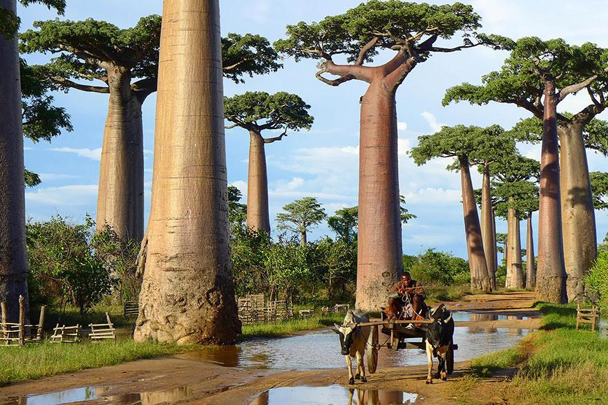 C'est de toute beauté : sites et lieux magnifiques de notre monde.  Baobab