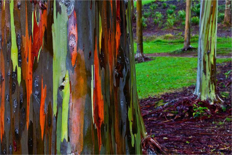 C'est de toute beauté : sites et lieux magnifiques de notre monde.  Beucalyptus