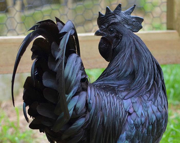 Je veux coq noir gros noir femmes humide chatte