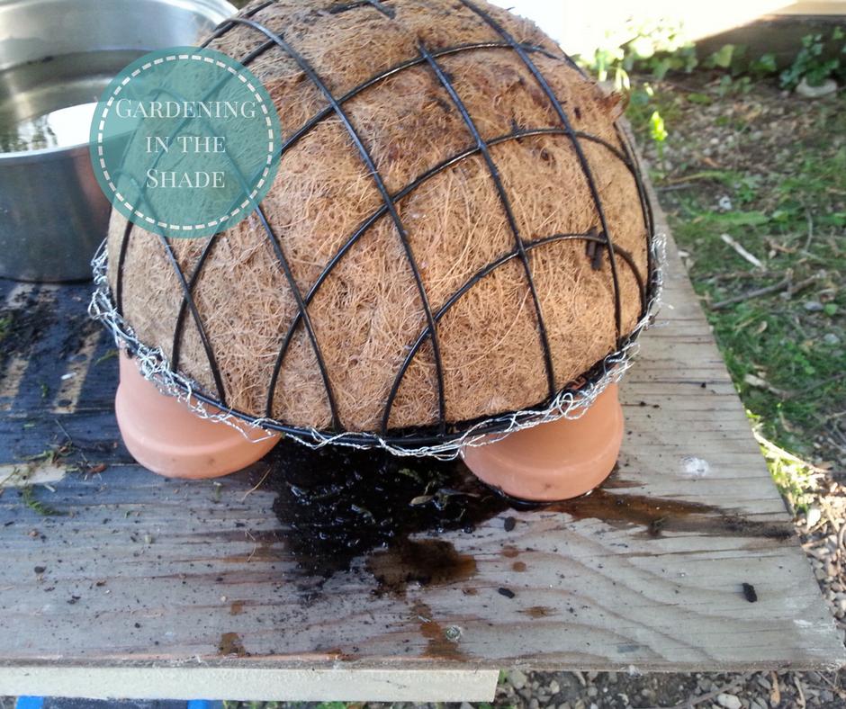 voil comment faire une tortue jardin avec des plantes grasses et de la mousse. Black Bedroom Furniture Sets. Home Design Ideas