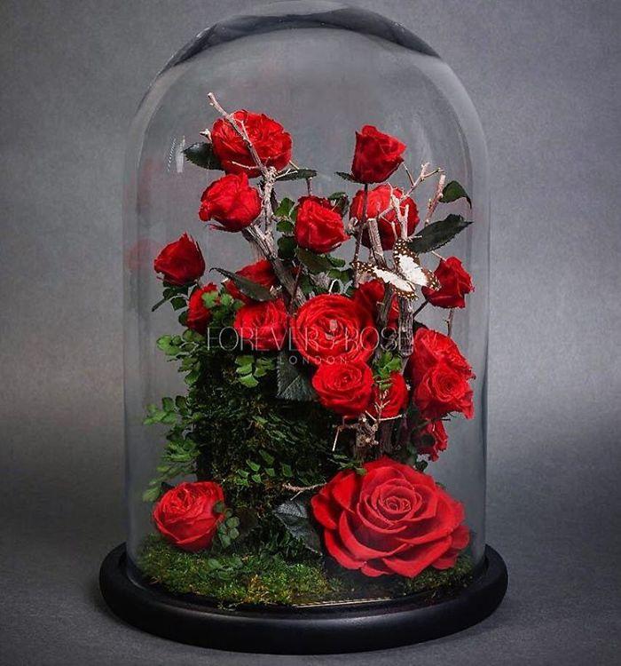 la belle et la b te vous pouvez vous procurer la fameuse rose de la b te et elle aussi. Black Bedroom Furniture Sets. Home Design Ideas