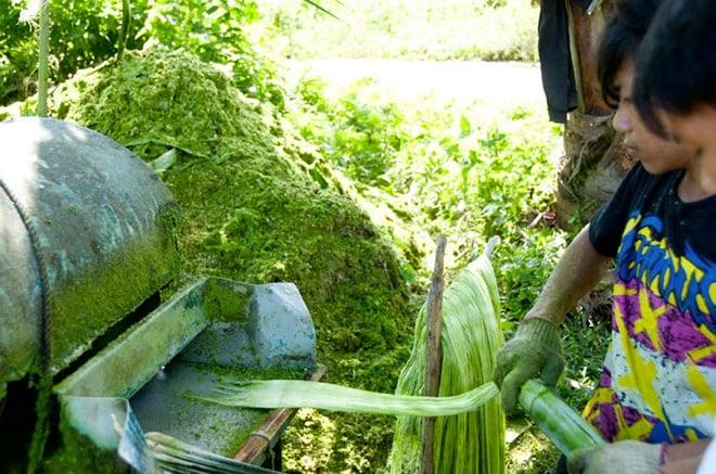 f45b28d708e4 ... cuir végétal à base de fibres d ananas, comme le relaye nos confrères  de 20 Minutes. C est notamment avec cette matière que l on crée le Barong  Tagalog, ...