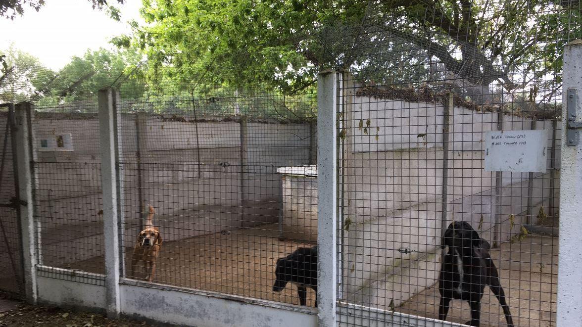 Décédée sans héritier, une femme transmet l'ensemble de son héritage à un refuge animalier
