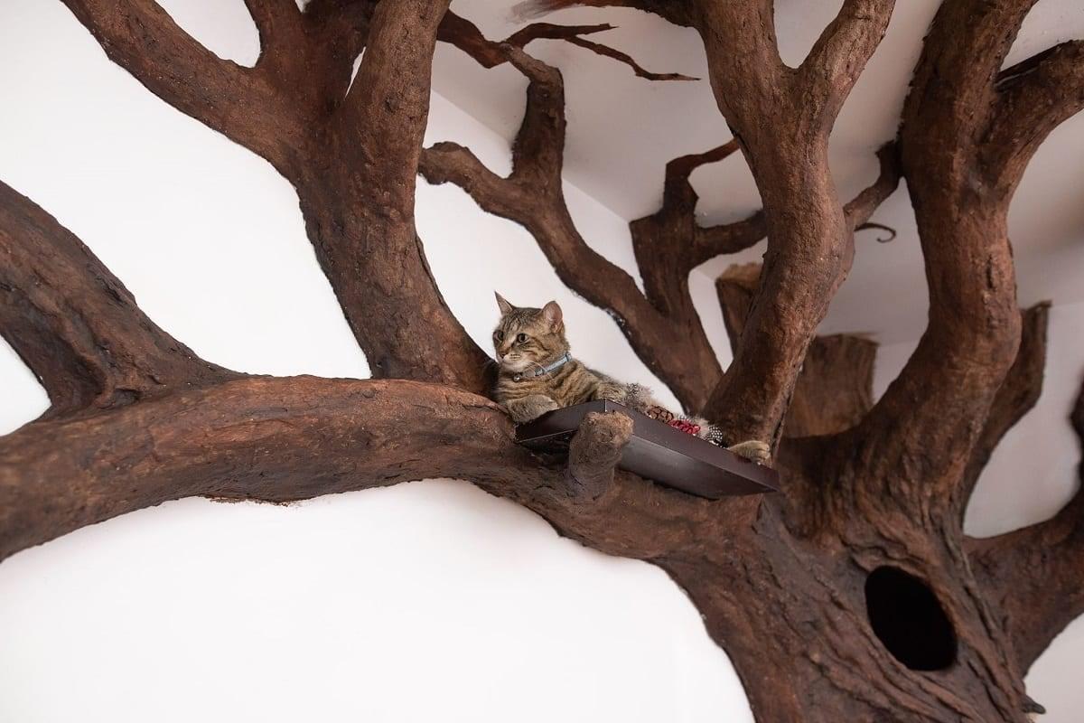 Comment Fabriquer Un Arbre À Chat il ridiculise le concept des arbres à chat en créant un