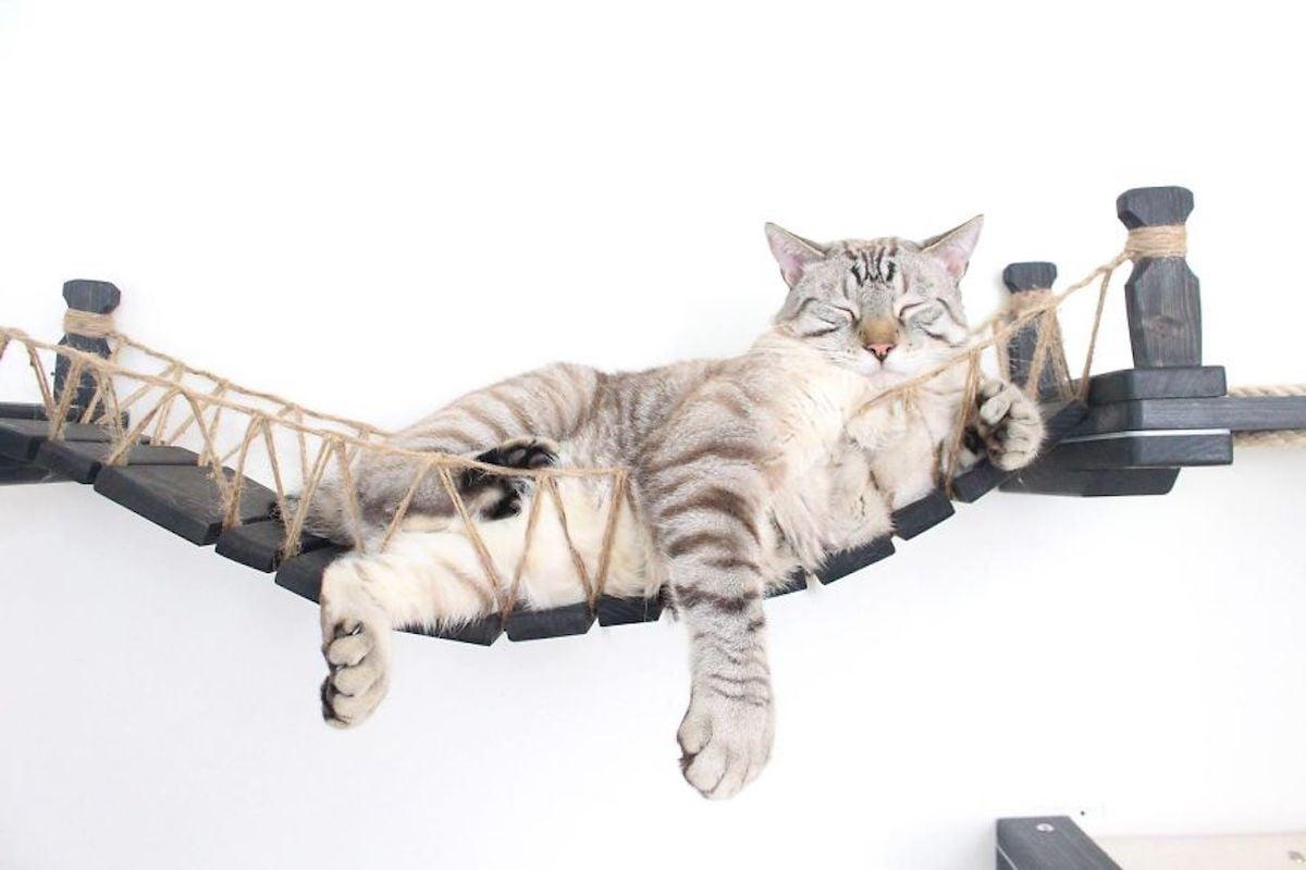 des parcours pour chat qui se fixent sur les murs. Black Bedroom Furniture Sets. Home Design Ideas