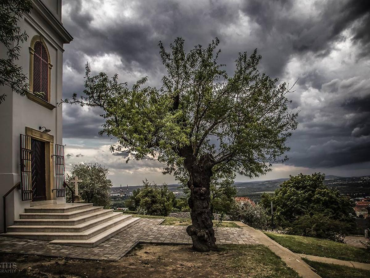 10 arbres qui renferment les plus belles histoires, lauréats du concours Arbre Européen de l'Année 2019 Concours-arbre-europeen-2019-1