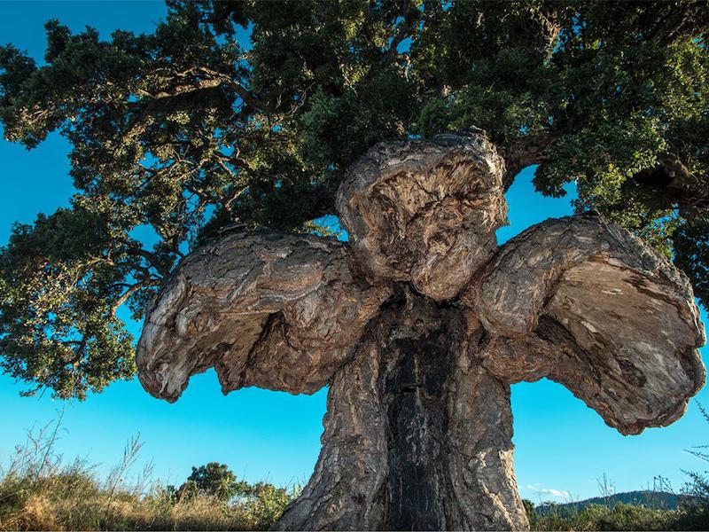10 arbres qui renferment les plus belles histoires, lauréats du concours Arbre Européen de l'Année 2019 Concours-arbre-europeen-2019-10