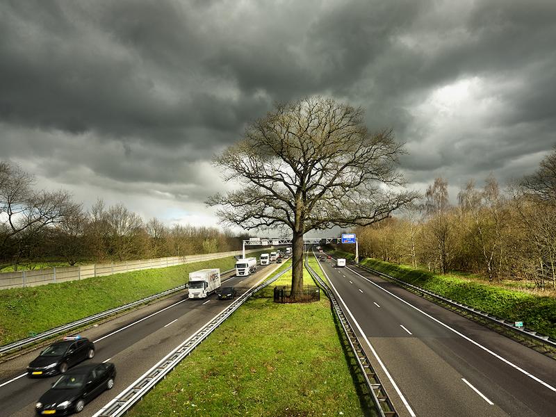 10 arbres qui renferment les plus belles histoires, lauréats du concours Arbre Européen de l'Année 2019 Concours-arbre-europeen-2019-19