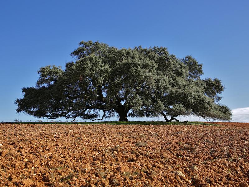 10 arbres qui renferment les plus belles histoires, lauréats du concours Arbre Européen de l'Année 2019 Concours-arbre-europeen-2019-7