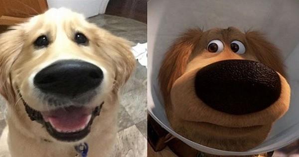 Transformez votre chien et donnez-lui l'apparence de Doug, dans « Là-Haut » grâce à Snapchat