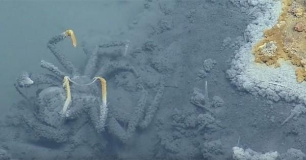 Découvert par des scientifiques, ce lac sous-marin est fatal pour toutes les espèces qui s'y aventurent...