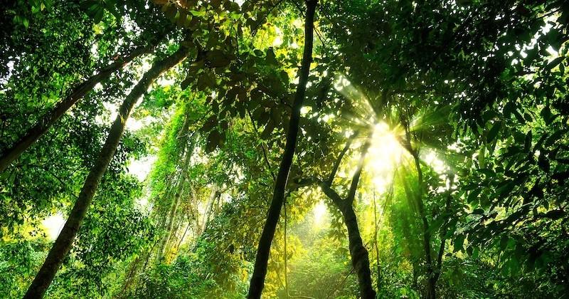 Une forêt primaire, dépourvue de toute activité humaine, bientôt implantée sur le sol européen