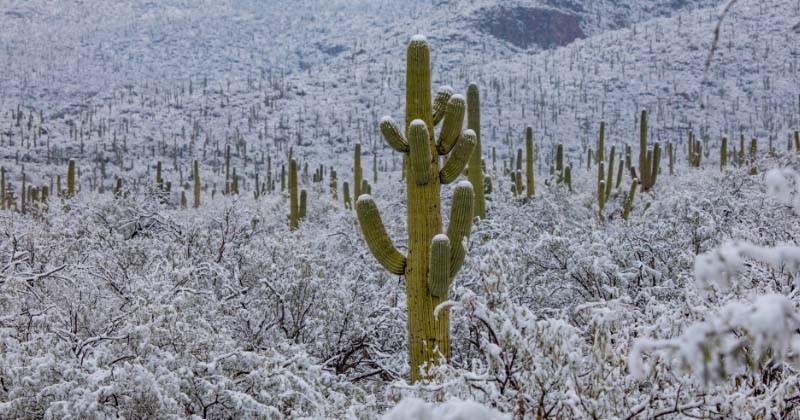 Des images magnifiques et rares du désert de l'Arizona sous la neige