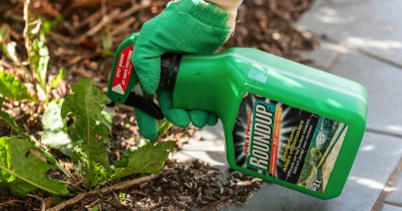 Nouveau revers judiciaire pour Monsanto dans l'affaire Paul François