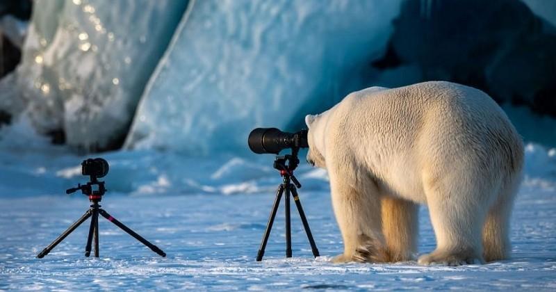 Les finalistes du concours «The Comedy Wildlife Photography Awards» sont connus, voici une sélection des photos les plus drôles des animaux