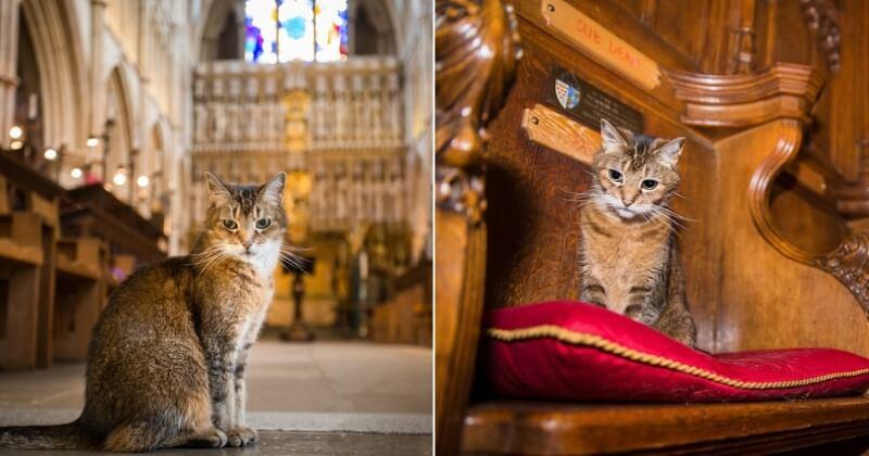Une cathédrale a organisé des obsèques poignantes pour une chatte errante ayant vécu 12 ans entre ses murs