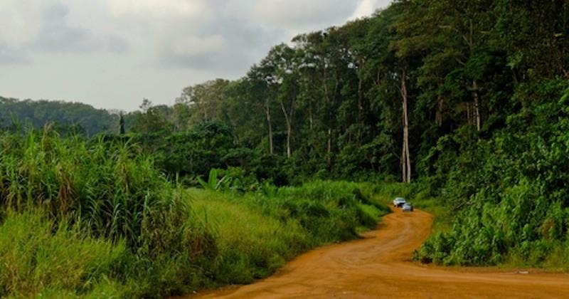 La Norvège va financer le Gabon dans ses actions pour la lutte contre la déforestation