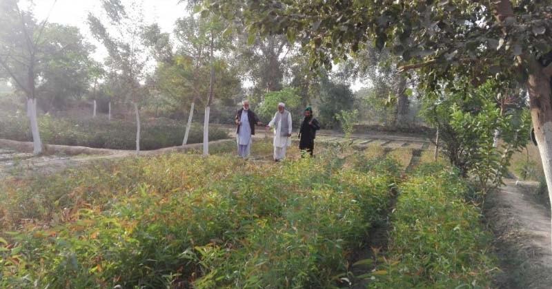 Au Pakistan, un milliard d'arbres replantés pour lutter contre l'érosion des sols et le réchauffement climatique