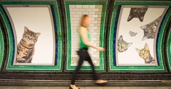 Contre ce qu'ils appellent la « pollution publicitaire dans le métro », ce collectif a remplacé toutes les pubs d'une station de métro... par des chats ! Et les photos sont géniales