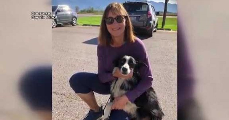 Aux États-Unis, une femme quitte son emploi pour retrouver sa chienne 57 jours plus tard
