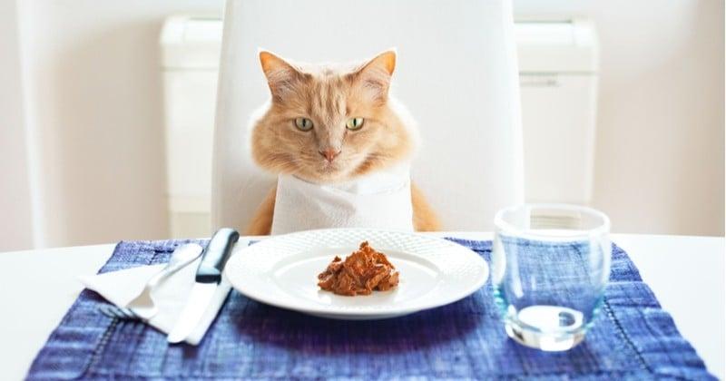 Pour la Journée Internationale du Chat, faites leur plaisir en préparant des croquettes ou de la pâtée maison!