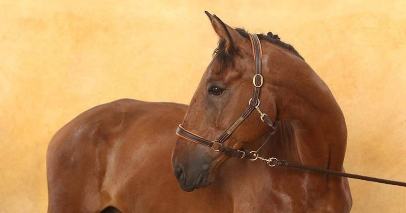 Douze chevaux sauvés de l'abattoir grâce à la mobilisation des internautes
