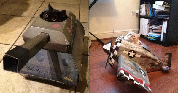 Avions, voiture, camions de pompiers, platine de DJ : une entreprise anglaise invente des jouets incroyables destinés... aux chats !
