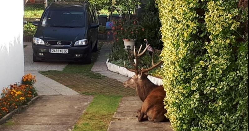Polémique dans l'Oise après l'abattage d'un cerf dans un jardin privé par des chasseurs à courre