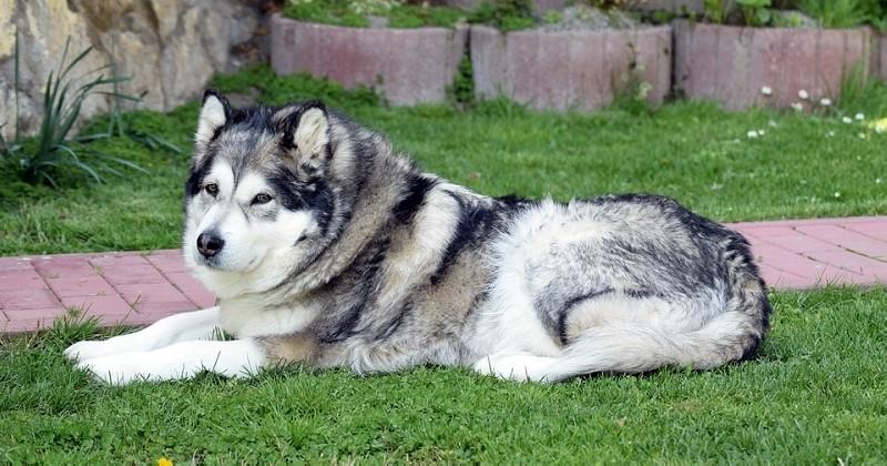 Ils parcourent 800km pour retrouver leur chien, disparu depuis six mois