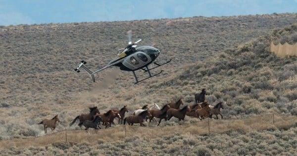 45 000 chevaux sauvages pourraient être prochainement abattus par le Gouvernement Américain pour faire de la place pour les gros élevages... Et personne n'en parle