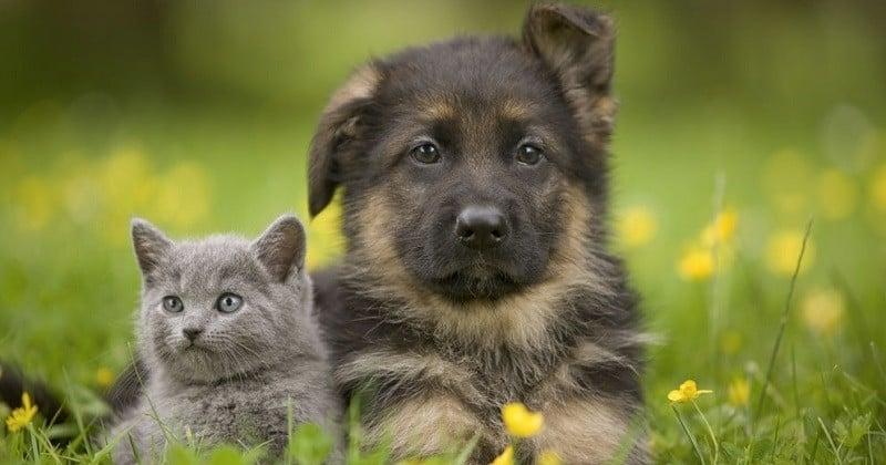 Une start-up américaine propose de louer des chatons et des chiots à la journée
