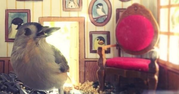 Elle invite les petits oiseaux de son jardin chez elle, grâce à des salons miniaturisés... Les photos sont trop mignonnes !
