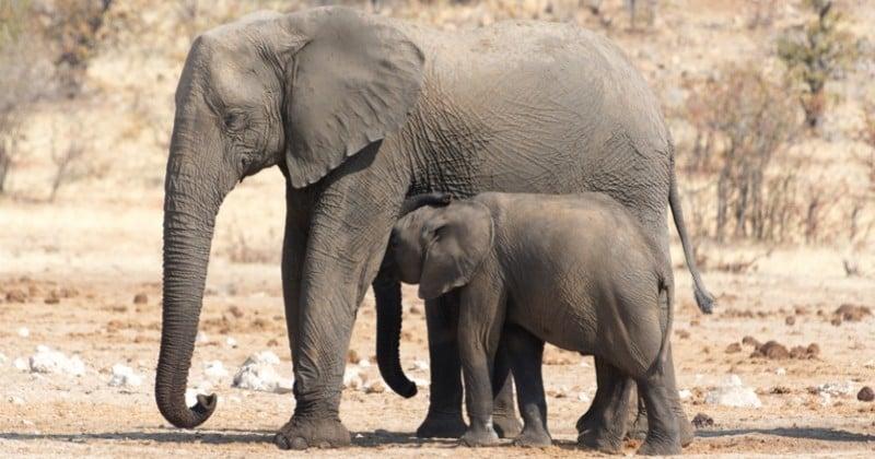 Afrique : le Botswana va légaliser la chasse aux animaux sauvages