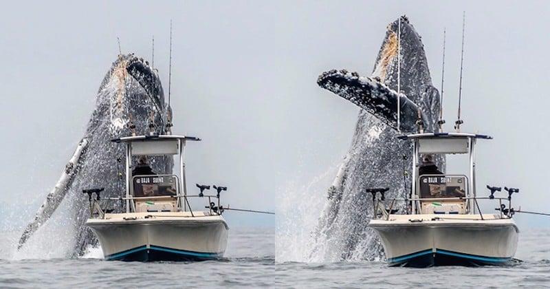 Une vidéo époustouflante immortalise le saut d'une baleine à bosse au-dessus d'un bateau de pêcheur