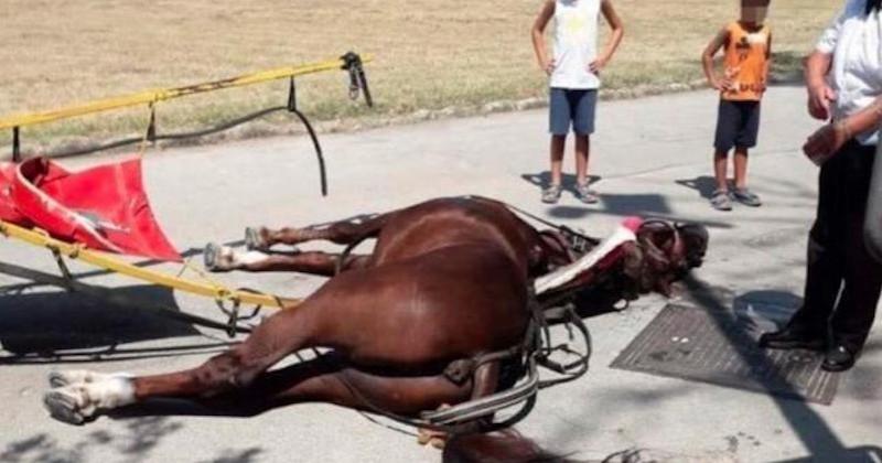 Italie : un cheval est décédé en promenant des touristes alors que la température dépassait les 36 degrés