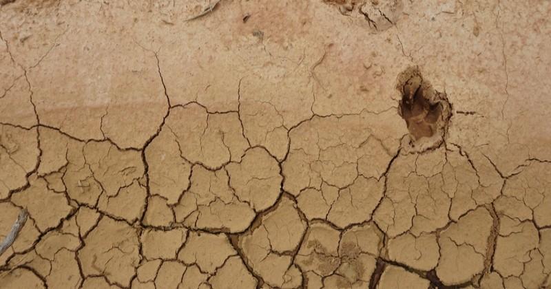 Le climat de la Terre ressemblera à celui d'il y a trois millions d'années, dès 2030