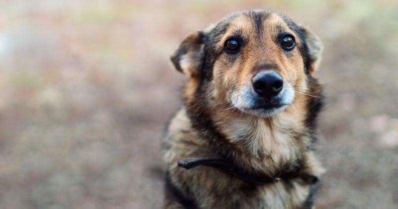 En Grèce,  la maltraitance animale est désormais passible d'une peine de 10 ans de prison