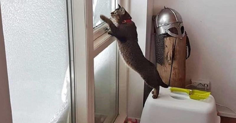 Un hôtel islandais a embauché un chat pour ses qualités de chasseur de souris