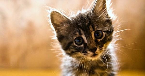 11 raisons pour lesquelles votre obsession des chats vous rend heureux et en meilleure forme !