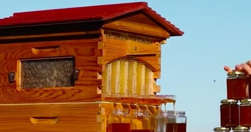 Flow Hive, la ruche révolutionnaire qui permet de récolter du miel avec un... robinet