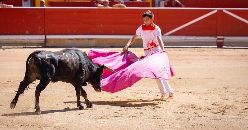 Suite à la reprise des corridas en Espagne, des militants relancent les appels pour interdire la tauromachie