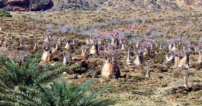 Cette île isolée est l'endroit le plus «extraterrestre» de la planète Terre !
