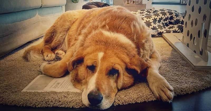 Un magasin IKEA ouvre ses portes aux chiens abandonnés afin de les protéger du froid