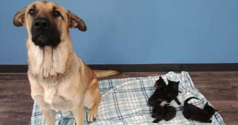 Cette chienne errante a protégé du froid une portée de cinq chatons abandonnés sur la route